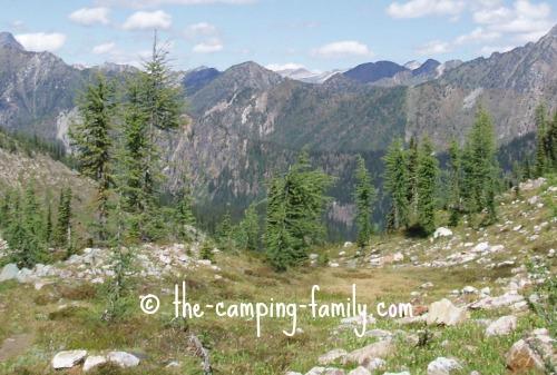alpine meadow