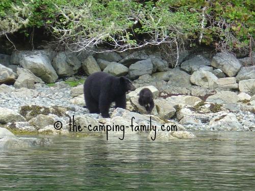 mama black bear and baby