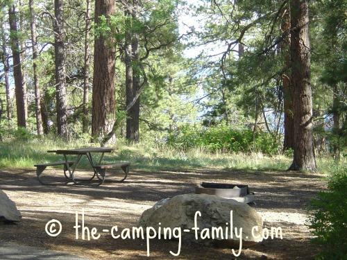 empty campsite in the woods