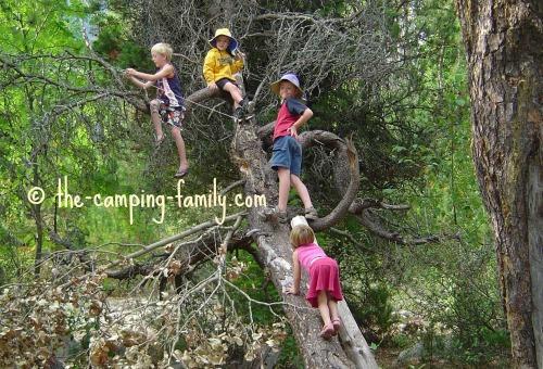 kids climbing a dead tree