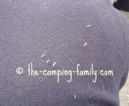 many mosquitoes on black jacket