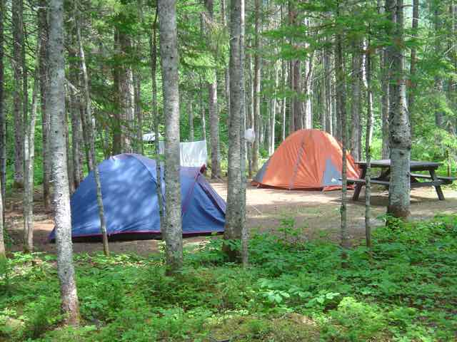 two tents in wooded campsite