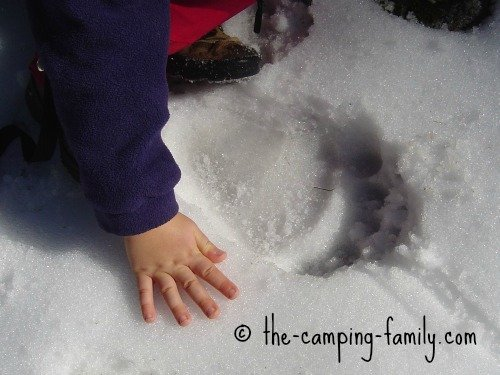 small hand beside bear print in the snow