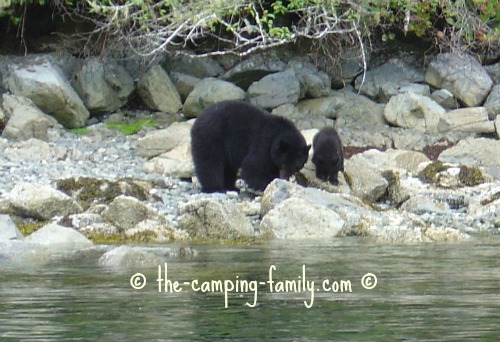 black bear mother and baby